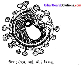 Bihar Board 12th Biology Model Question Paper 3 in Hindi 3