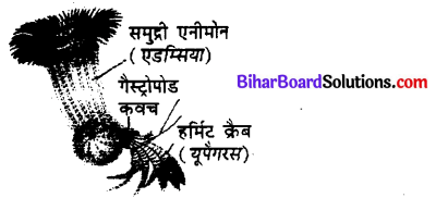 Bihar Board 12th Biology Objective Answers Chapter 13 जीव और समष्टियाँ 2