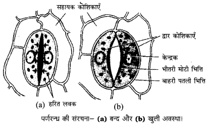 Bihar Board Class 10 Science Solutions Chapter 6 जैव प्रक्रम