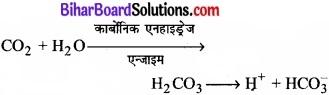 Bihar Board Class 11 Biology Chapter 17 श्वसन और गैसों का विनिमय