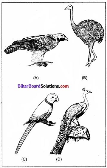 Bihar Board Class 11 Biology Chapter 4 प्राणि जगत