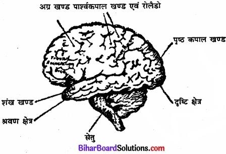 Bihar Board Class 11 Psychology Solutions Chapter 3 मानव व्यवहार के आधार