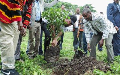 Bomen planten bijen redden