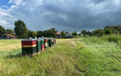 Bijenbaas Locatie Broek in Waterland – Noord Holland