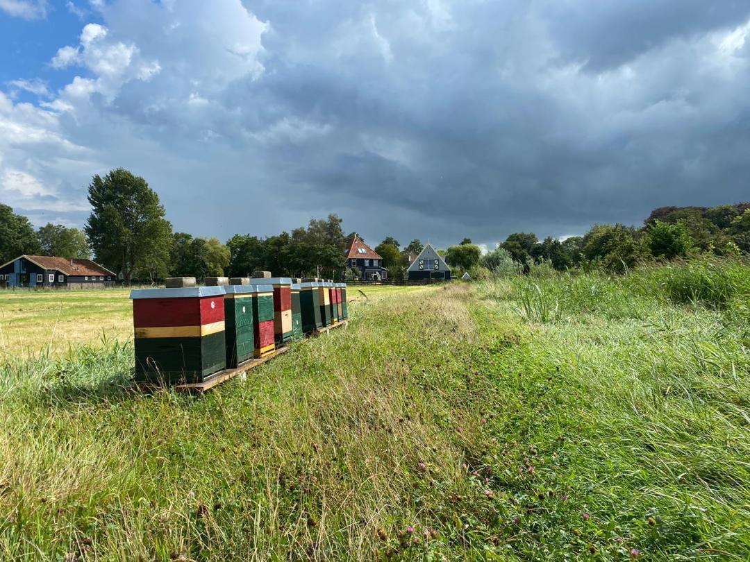 Er staan nu Bijenbaas bijenvolken in Broek in Waterland - Provincie Noord Holland