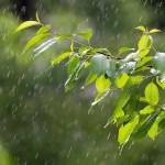 梅雨になると肌荒れしやすくなるのはどうして?原因と対策