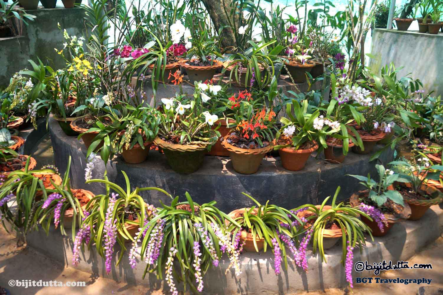 Kaziranga Orchid Garden
