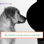 Hoe introduceer ik mijn hond aan mijn baby?