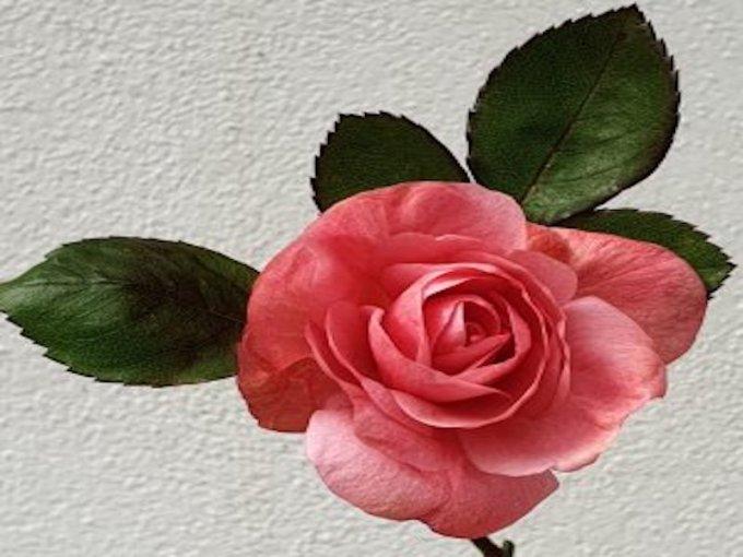 Bijoux-Roz : Créations artisanales