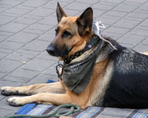 dierenartsen hond
