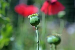 Huidklachten door allergie voor opiaten