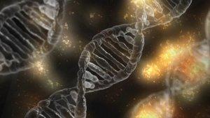 Gen-varianten hebben invloed op lawaaidoofheid