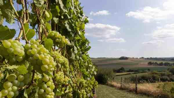 Wijngoed Fromberg Ubachsberg