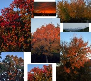 Austin  Fall Colors