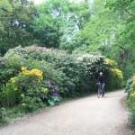 Bike-path-in-Tergarten