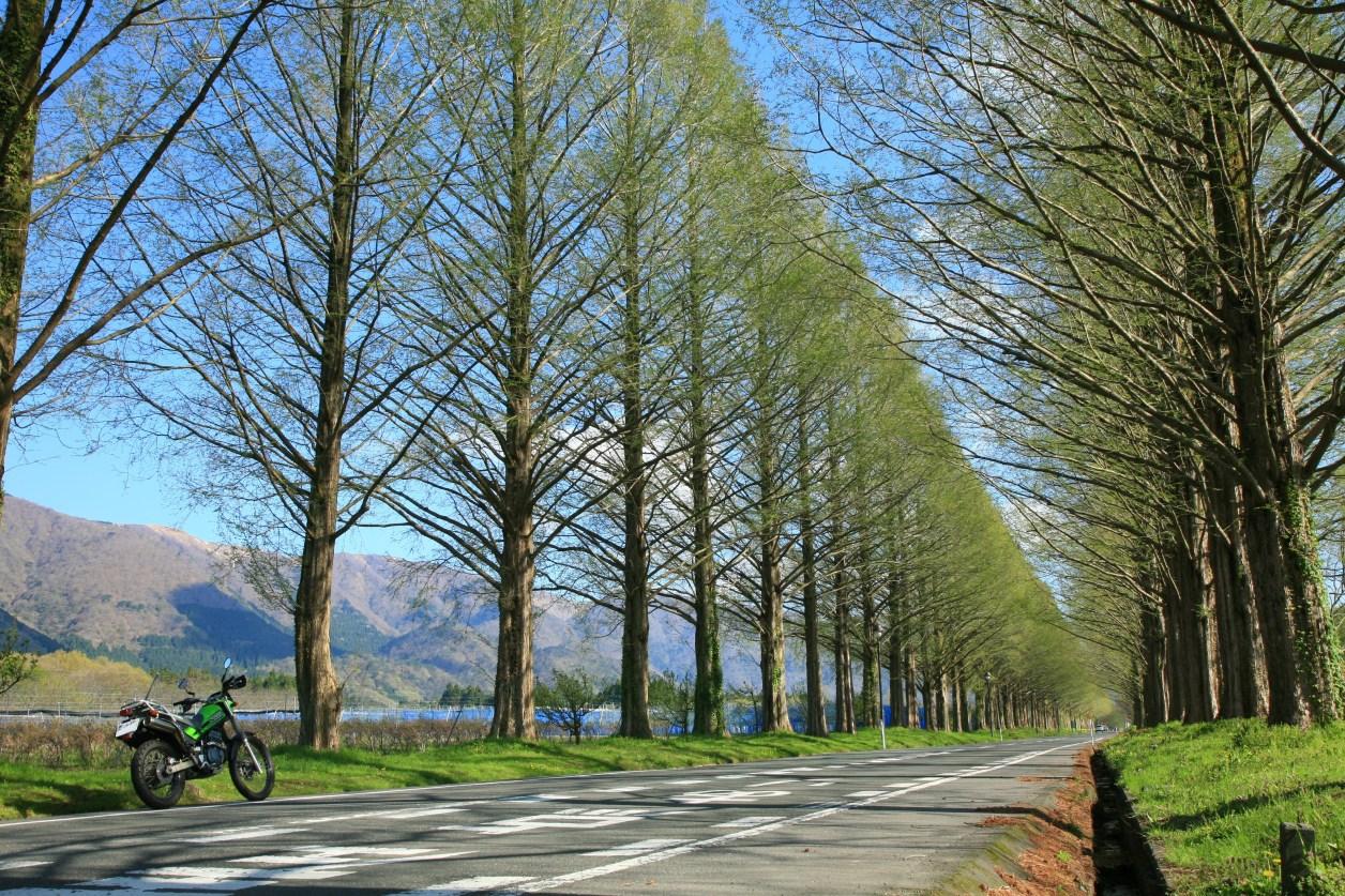 スーパーシェルパ(カワサキ)滋賀県高島市メタセコイヤ並木