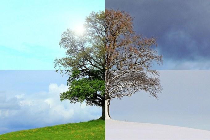 今年の季節 夏 秋 冬 春 ツリー