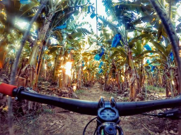 Plantação de bananas (Divulgação  Brasil Ride).jpeg