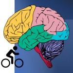 Cyclist brain graphic