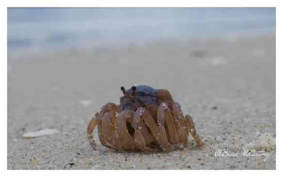 Alone on the beach with crabs!