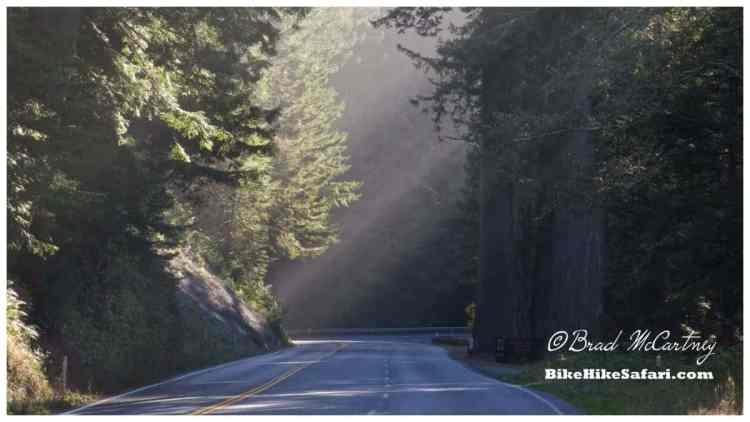 Del Norte Coast Redwoods State Park, Redwoods Hwy