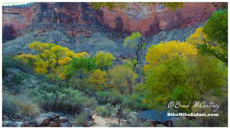 Indian Garden Campground surrounded by Cottonwood trees