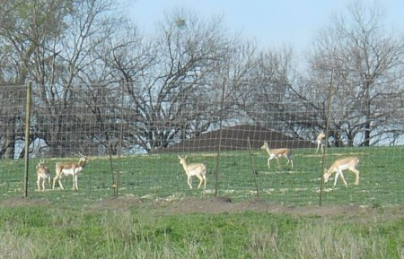 The animals take off when I stop and get out my camera. But the guy on the left shows off his long horns. (Click to enlarge.)