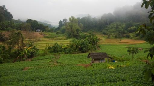 Thajská Farma