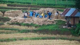Sklizeň rýže