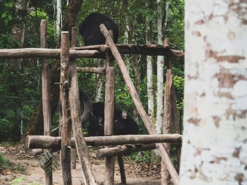 Moon Bears in Kuang Si Sanctuary