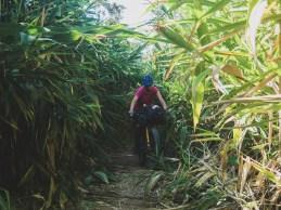 Bamboo Tunnels of Vang Vieng