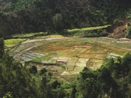 Rýžová políčka v provincii Kon Tum