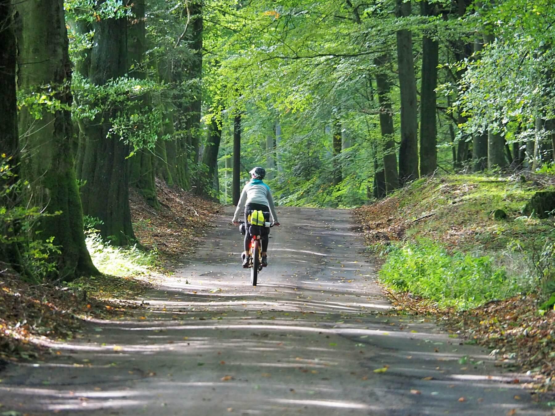 Hluboké dánské lesy.