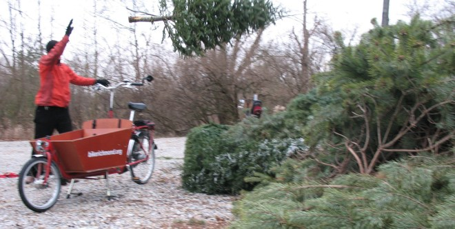 Christmas Tree Recycling, by bike, 2007