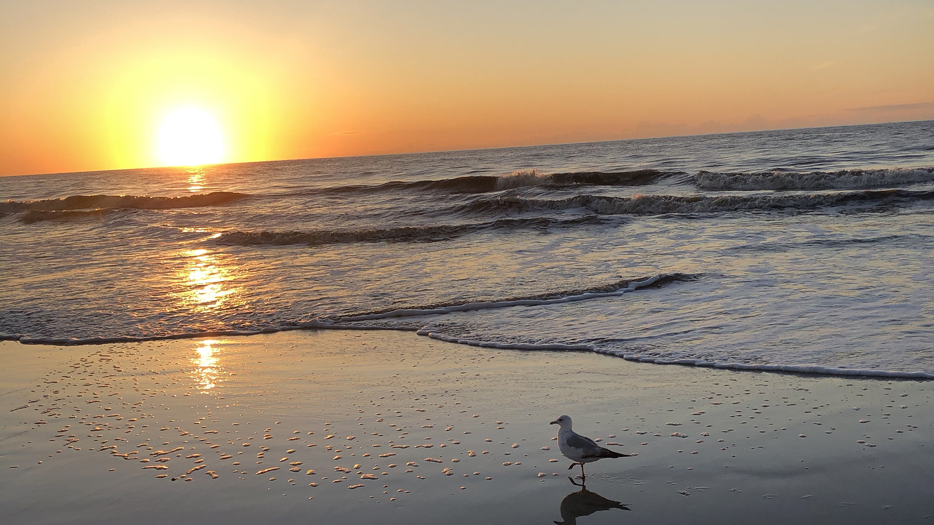 Sunrise-Atlantic Ocean - Seagull East Beach on St. Simons Island
