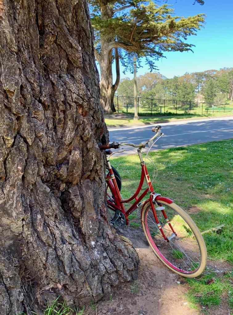 bike leaning against a tree in golden gate park