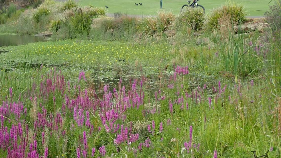 Mt Annan Botanical Gardens to Narellan Loop