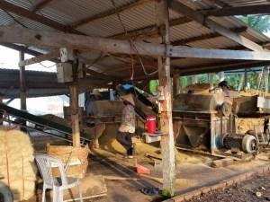 C:\Users\Owner\Desktop\BOB Vietnam Tour\20191105_coconut farm.jpg
