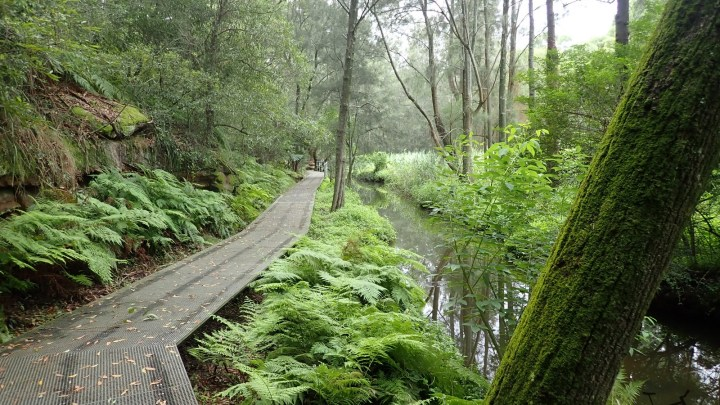 Pittwater Rd – Field of Mars