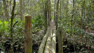 Orlando Sentinel: With Pine Hills Trail, green space will grace urban area