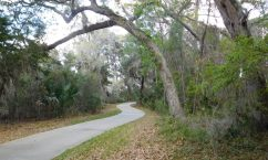 Jekyll Island, once the site of a resort for the ultra-wealthy, is now largely a Georgia state park. A fine system of bicycle paths extends all over the island.