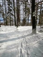 Ski and bike traces...