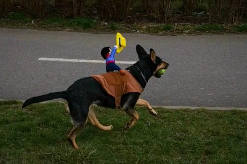 Cowboy dog rider