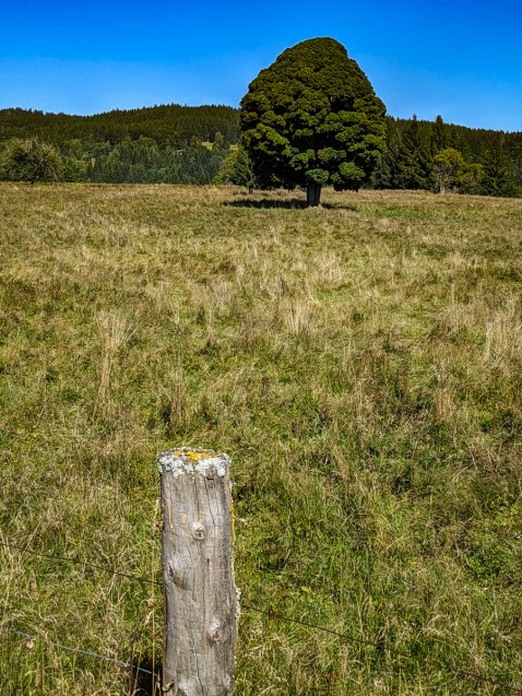 Typical Šumava meadow
