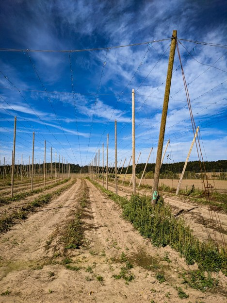 Hops used to be here