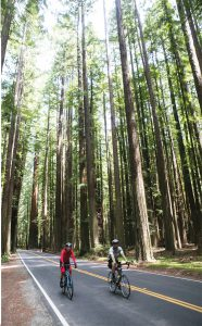 Redwoods_cyclists_lr