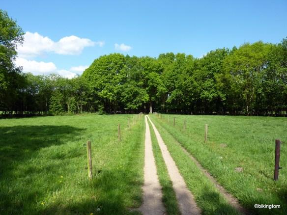 Ein Radweg mitten durch die Wiesen