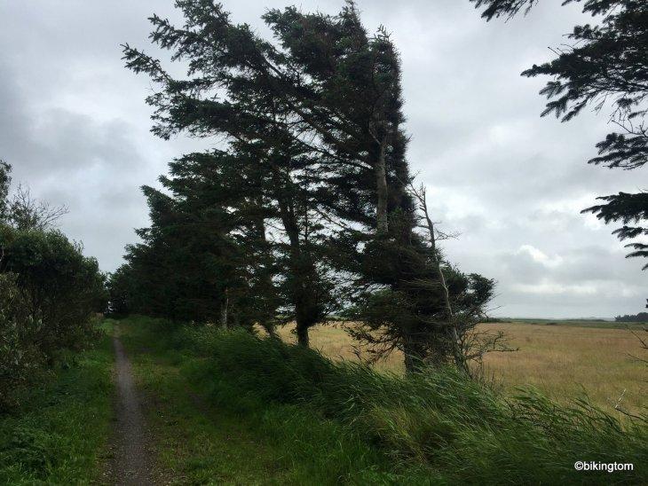 bikingtom nordseeküstenradweg