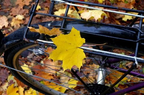 Fahrrad Herbst bikintomg