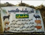 @AwaisHussain39 Sindh gov established flood emergency camp for livestock in flood effected areas #PPPHelpingFloodAffected 1